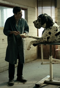 Dogman movie still